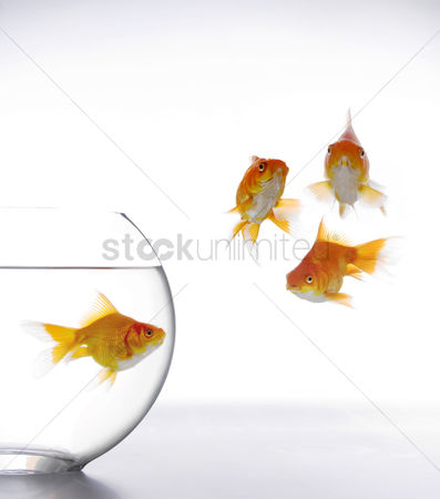 Conceptual : Fish looking at three other fishes floating outside the aquarium