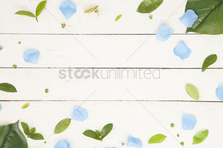 Blank : Flatlay of background with leaves