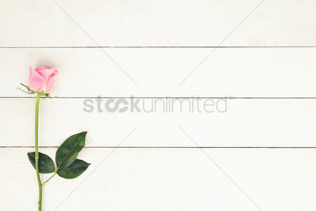 Flat : Flatlay of background with pink rose