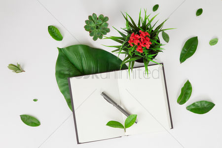 Leaf : Flatlay of white background with plants