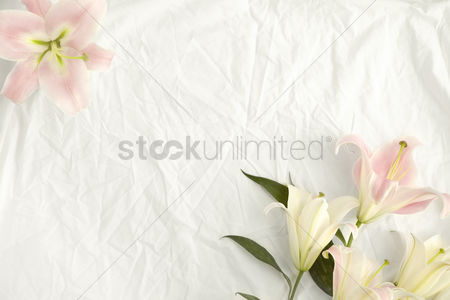 Floral : Flatlay of white cloth background with lilies