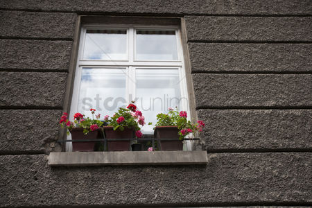 Houseplant : Flower pots at window sill