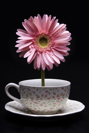 Flower : Flower standing in a cup