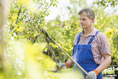 40 44 years : Gardener trimming tree branches at plant nursery