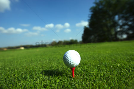 Grass background : Golf ball on tee