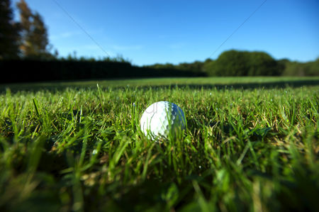 Grass background : Golf ball on wet lush fairway