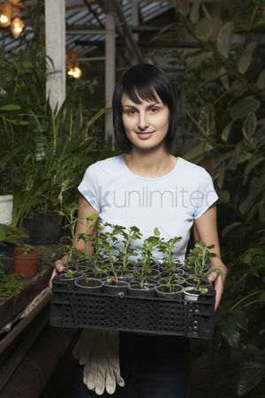 Greenhouse : Greenhouse worker with tray of potted plants