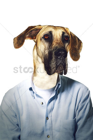 Frowning : Grumpy dog s head on businessman body