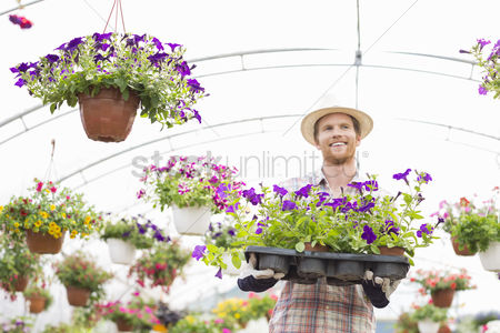 Greenhouse : Happy gardener holding flower pots in crate at greenhouse