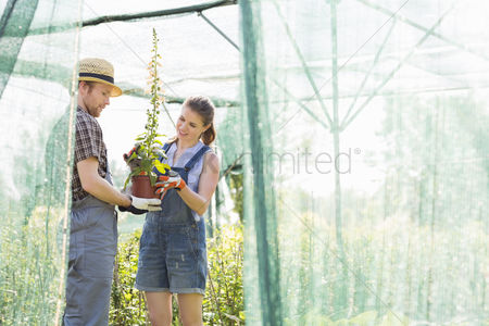 Greenhouse : Male and female gardeners discussing over potted plant at greenhouse