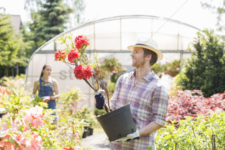 Greenhouse : Male gardener examining flower pot with colleague standing in background outside greenhouse