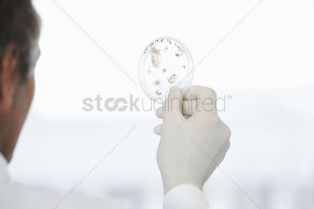 Examination : Male lab worker holding petri dish to the light