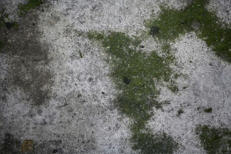 Weathered : Moss on wall