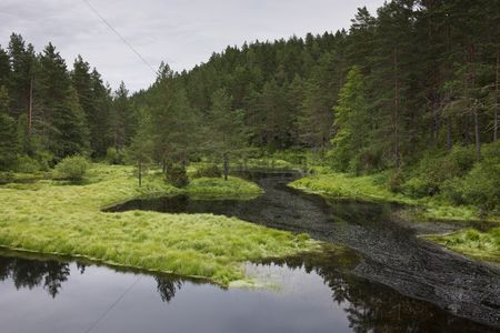 Travel : Norwegian forest clearing with still water flatelandsfjorden