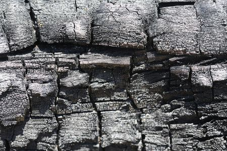 Weathered : Old tree bark