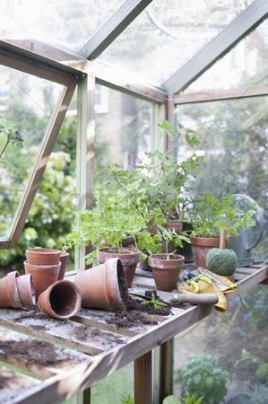 Greenhouse : Overturned pots on workbench in potting shed