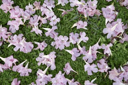 Grass background : Pink flowers on grass