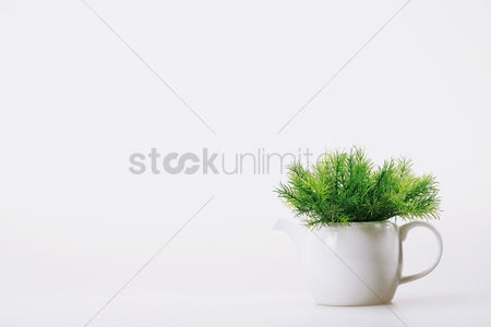 Background : Plant in a teapot