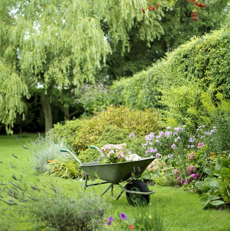 Outdoor : Plants in wheelbarrow