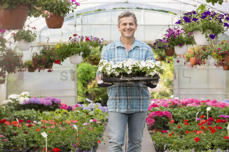 Greenhouse : Portrait of happy gardener carrying crate with flower pots in greenhouse