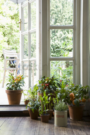 Houseplant : Potted plants in house
