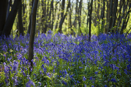 Trees : Purple wildflowers in forest