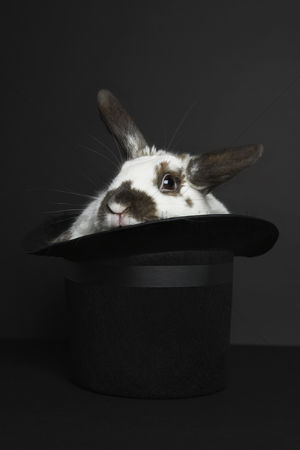 Arts : Rabbit in top hat studio shot
