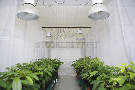 Greenhouse : Rows of plants in greenhouse