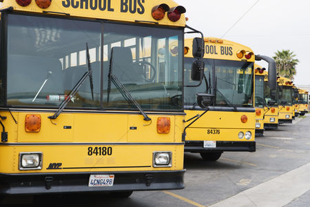 Transportation : School busses parked in parking lot