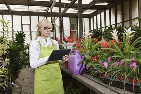 Greenhouse : Senior florist using tablet pc in greenhouse