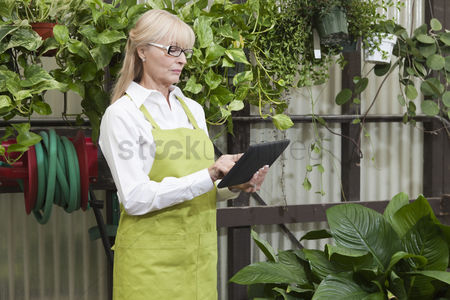 Greenhouse : Senior gardener using digital tablet in garden center