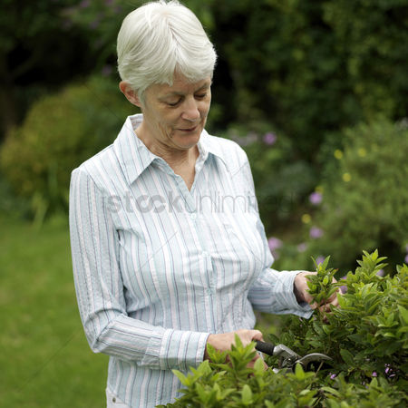 Adulthood : Senior woman trimming plant