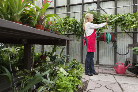 Greenhouse : Side view of a senior florist spraying pesticide in greenhouse