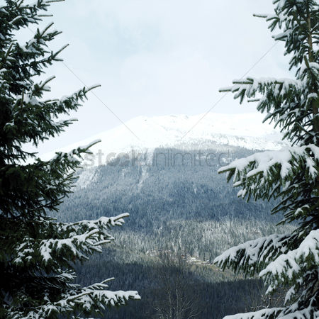 Outdoor : Snow-covered mountain and trees