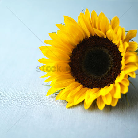 Food  beverage : Sunflower