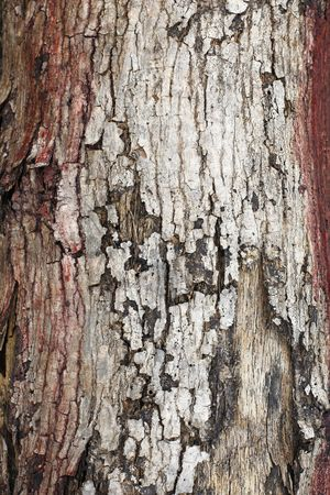 Weathered : Tree bark