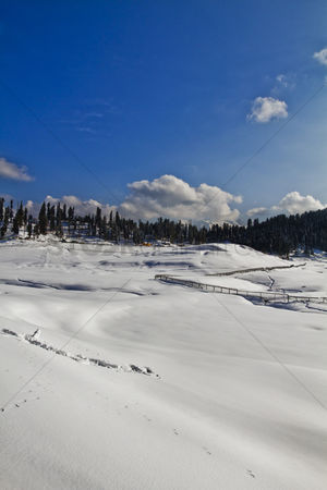 Cold temperature : Trees on a snow covered landscape  kashmir  jammu and kashmir  india
