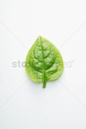 Photosynthesis : Vegetable leaf