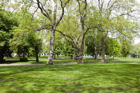 Trees : View across shady grass into park