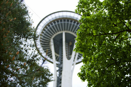 Arts : View through trees of space needle