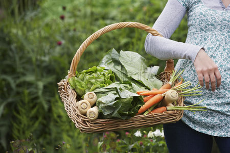 Food : Woman holding vegetable basket mid section close-up