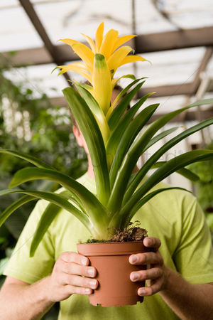 Greenhouse : Young man holding exotic potted plant in front of face
