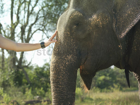Animal head : Young woman stroking elephants head close-up
